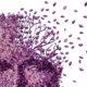 Dementia Disease Image